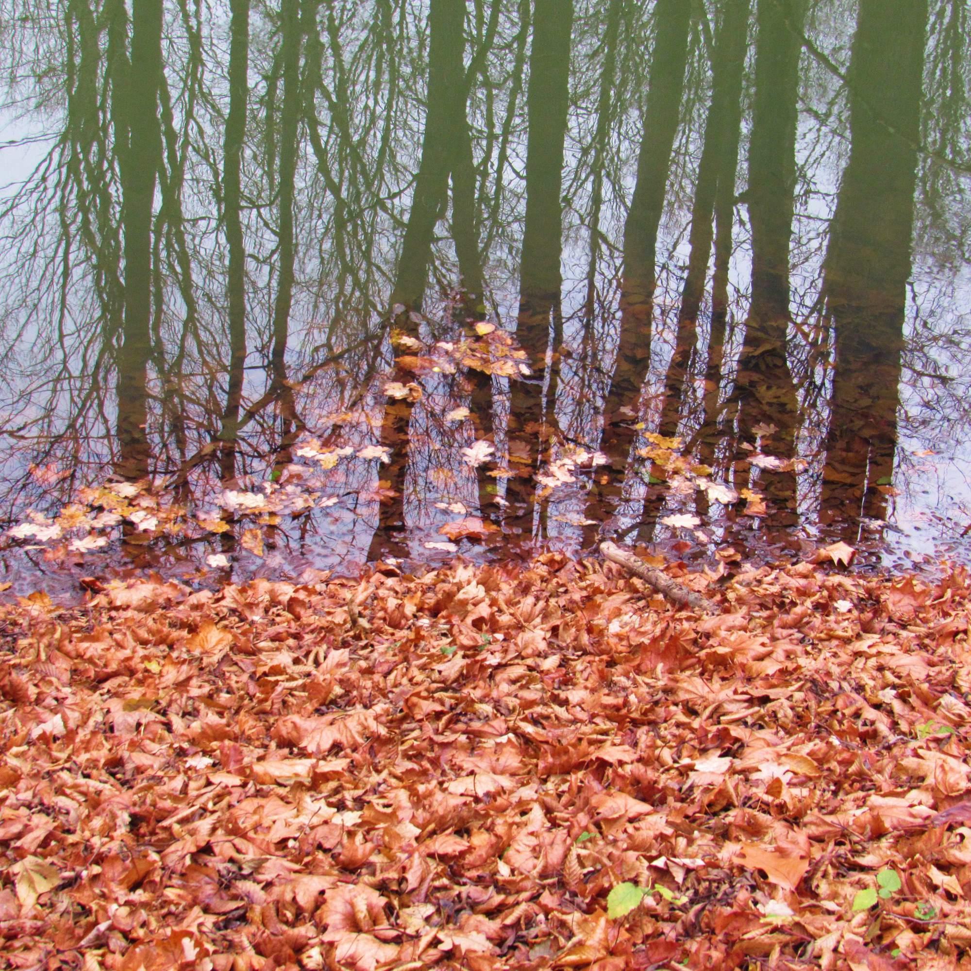 Polanský les